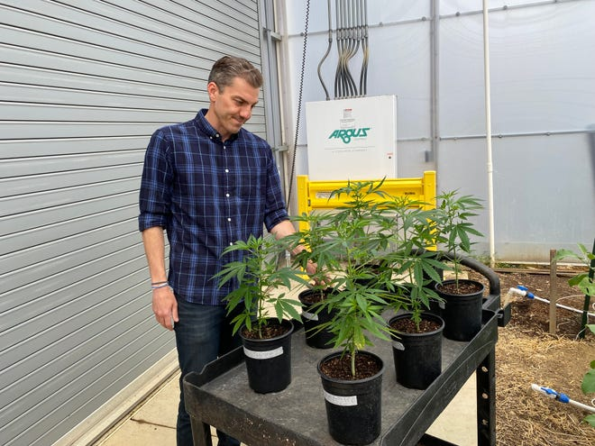 Brian May, president of Pocono Raceway, examines hemp plants at Pocono Organics, a family business run by Ashley Walsh. The company has just become a Regenerative Organic Certified farm, making it the very first hemp grower in the world to receive the designation.