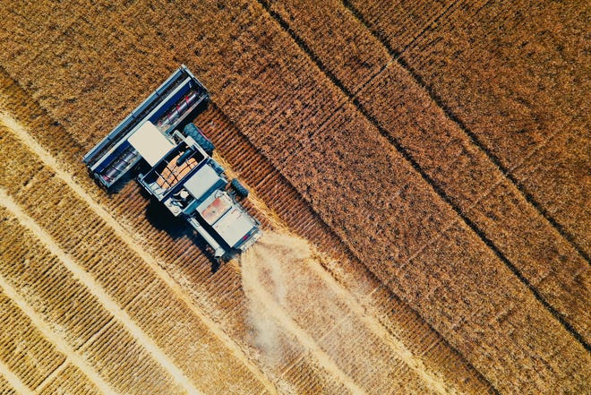 A farmer cuts wheat in Sedgwick County.