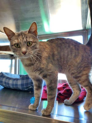 Penny, the Wellington Humane Society Pet of the Week for June 27 - July 3