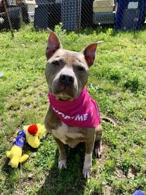 Rainbow is available for adoption through WARL.