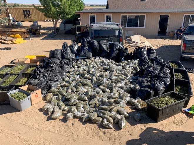 Marijuana can be seen in bags which was seized during a search warrant at an outdoor grow in Oro Grande on Friday, July 2, 2021.
