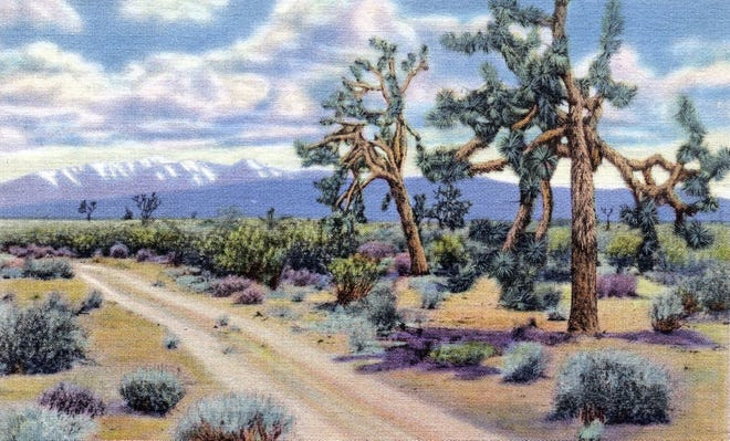 A postcard of a dirt road in Joshua Tree by Stephen Willard circa 1938.