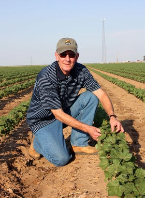 Steve Verett retired from Plains Cotton Growers last week after serving as its CEO since 1997.