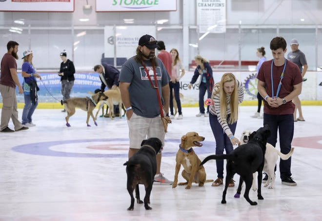 Halifax Humane Society will host the Dog Park on Ice on Wednesday.