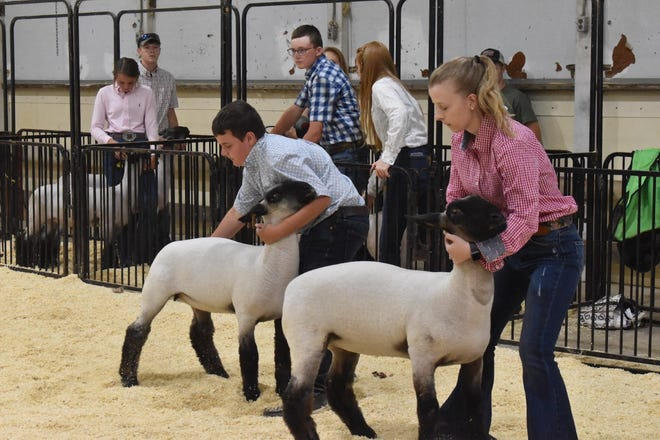 AlWood FFA's Dylan Nimrick, left, and his sister, Paige, set up their breeding ewe lambs in the Section 3 fair on Friday, July 2, at the Henry County fairgrounds in Cambridge
