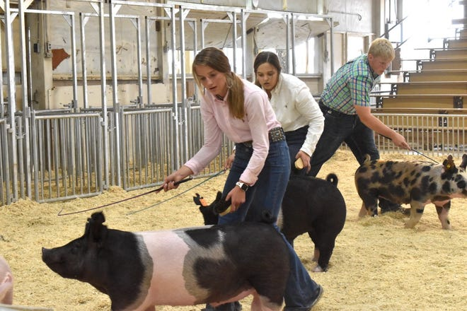 During swine showmanship at the Section 3 FFA fair on Friday, July 2, the eventual winners are, front to back, Miranda Reed, Cambridge FFA, first place; Makayla Park, Annawan FFA, second; and Blake Orwig, Stark County FFA, third place.