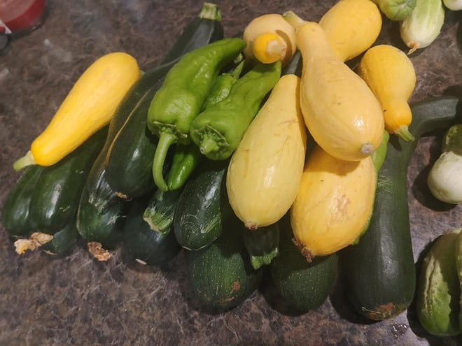 Texas A&M Extension Office's Concho Valley Horticulture July gardening newsletter offers insights into vegetable gardening, horticulture, and insect/caterpillar control
