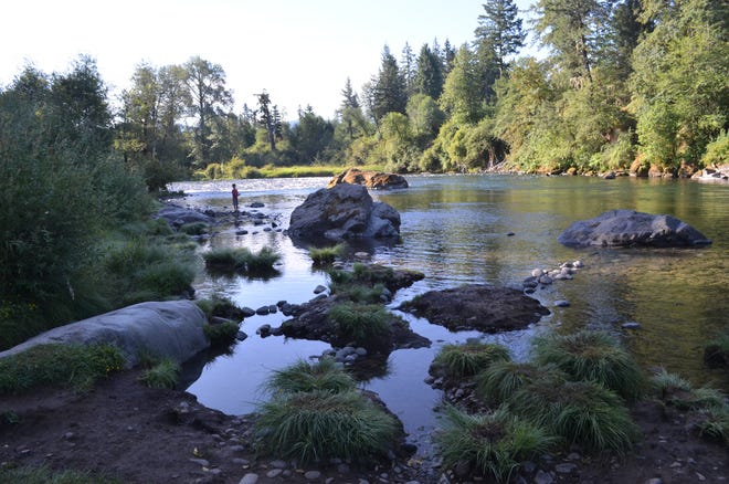 Hoot-owl fishing restrictions for low, warming water are in effect for hatchery Chinook salmon and hatchery steelhead on rivers such as the North Santiam.