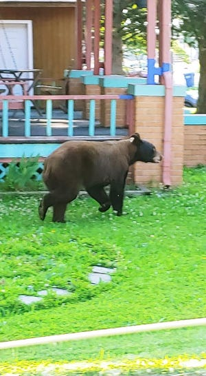 A black bear was spotted Tuesday near the Camdenton Middle School in Camdenton.