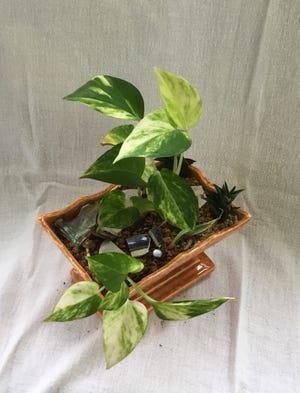 Pothos is a great houseplant for beginners.