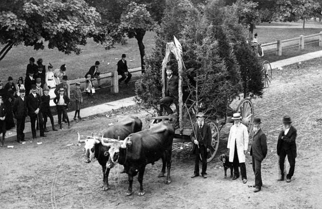 """Local farmer Mark Janes won a novelty prize for his float, """"a pair of oxen who pulled a small forest of upright fir trees and a lot of farming instruments"""" in the Fourth of July parade held in 1891 in Mansfield."""