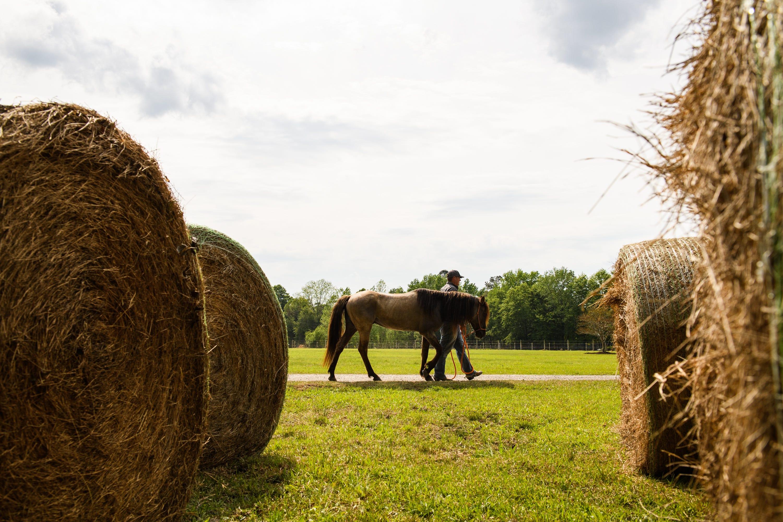 Shannon Hawkins walks Bird, a Marsh Tacky Horse, on his farm on April 15, 2021.