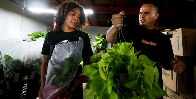 Michelle Alfaro and Mag Rodriguez, co-owners of Maranta Plant Shop, admire the Raindrop Peperomia plant after receiving a shipment at their shop in Milwaukee.