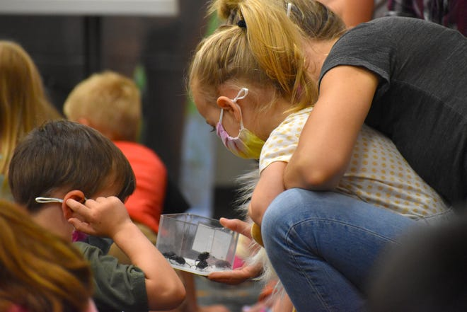 Young people at Champion Public Library investigate dung beetles during Insect Adventures Wednesday, July 7, 2021.