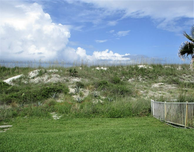 The dunes in Neptune Beach. Sea oats have been thriving through a series of renourishment programs.