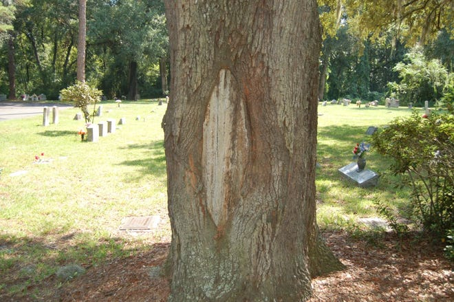 If there is wood under the peeling bark, look for the woundwood forming around the wound that is working to close it.