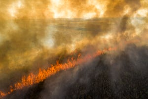 A sugar cane field burns before it is harvested near South Bay in January.