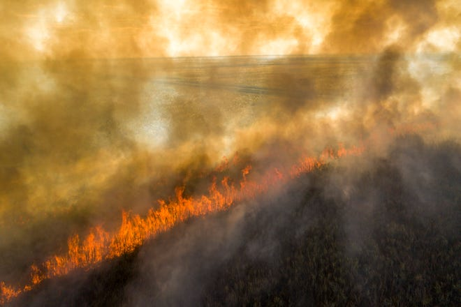 A sugar cane field burns before it is harvested in Okeelanta, Florida on January 29, 2021. (Greg Lovett/The Palm Beach Post)