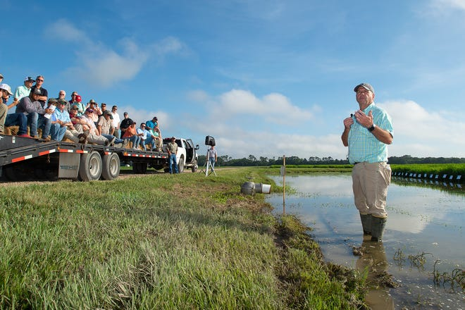 LSU AgCenter weed scientist Eric Webster speaks during the 112th annual field day at the H. Rouse Caffey Rice Research Station on June 30, 2021.