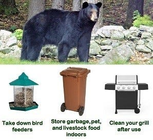 Only you can prevent bears taking advantage.