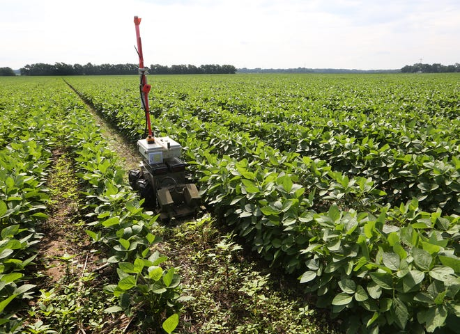 A robot travels between rows of soybeans as it cuts down weeds in a field near Cheney. In front of the robot is the density of weeds that will be cut and behind it shows the result.