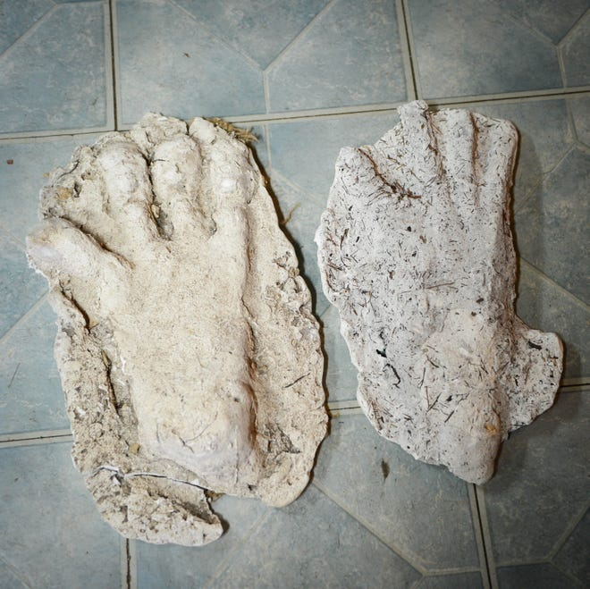A male skunk ape footprint casting, left, and female casting.
