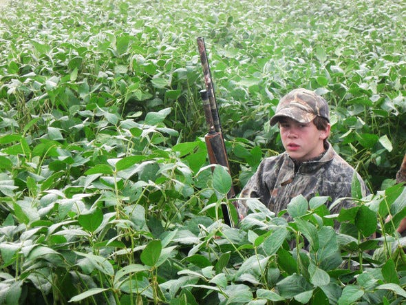 Missouri Department of Conservation will host a managed dove hunt for youth 11 to 15 years old at Columbia Bottom Conservation Area Sept. 1. Residents can apply online now through July 31. Participants must also attend the virtual Dove Hunting 101 clinic Monday, Aug. 23.
