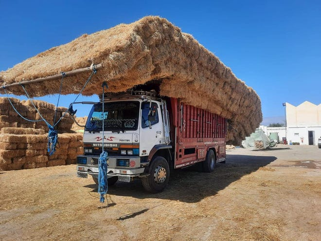 This is how they move straw in Morocco.