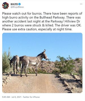 The Bullhead City Police Department warns drivers to watch out for potential burros along Parkway/Hillview Drive in Bullhead City.