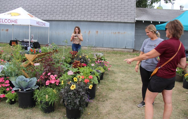 """Thursday at the Polk County Fair in Fertile, UMN Crookston Director of Outreach and Engagement Michelle Christopherson, right, chats about the """"Golden Eagle Garden"""" with the senior horticulture major who created it, Marina Wiley, shown on the left taking photos with her phone, and Wiley's roommate and fellow senior horticulture major, Grace Guyette. The Golden Eagle Garden can be found near the new animal barns."""