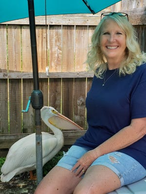 Kewanee wildlife rehabilitator Tammy Yarger recently received a call tor rescue a pelican off the side of a rural road. The pelican, which she named Gonzo, has been in the care of Yarger and her husband, Jim, who run the non-profit Hog Capitol Wildlife Rescue and Rehab in Kewanee.