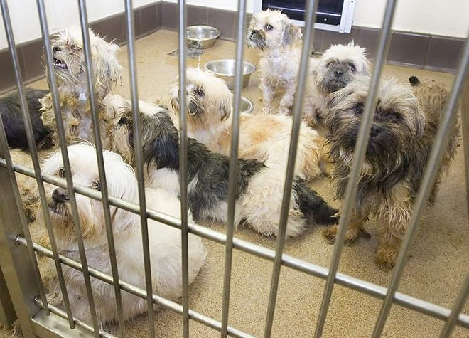 A kennel full of small dogs clamor for attention at the Apple Valley Animal Shelter in 2010. The shelter has seen an increase in canine distemper cases amid an outbreak in inland Southern California.