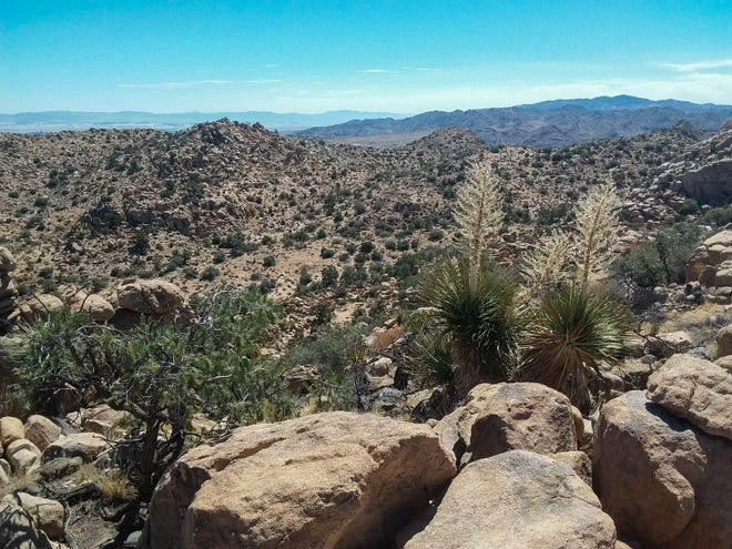 A panorama view shows land the Mojave Desert Land Trust purchased for conservation in December 2018 north of Joshua Tree National Park.