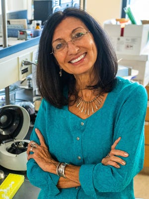 Elba Serrano, Regents professor of biology, will be traveling to Portugal next spring to study marine algae as a source of food to support brain health. The research is funded through a U.S. Fulbright Scholar Award.