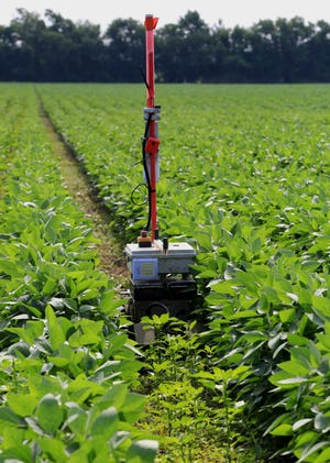 A Greenfield Robotics robot travels in between rows of soybeans as it cuts down weeds in a field near Cheney, Kan., on Tuesday, July 6, 2021. In front of the robot is the density of weeds that will be cut and behind it shows the result.