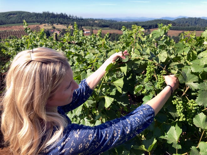 Christine Clair, winery director of Willamette Valley Vineyards, inspects pinot noir grapes.
