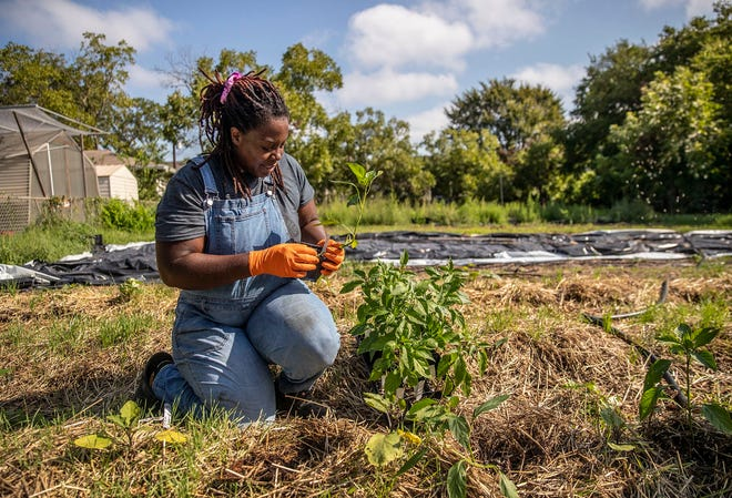 Tiffany Washington, an advocate for Black farmers and Black towns, is shown last fall in her East Austin farm.