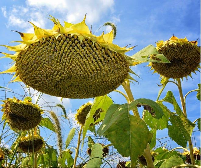 Summer is fleeting, so savor it now!