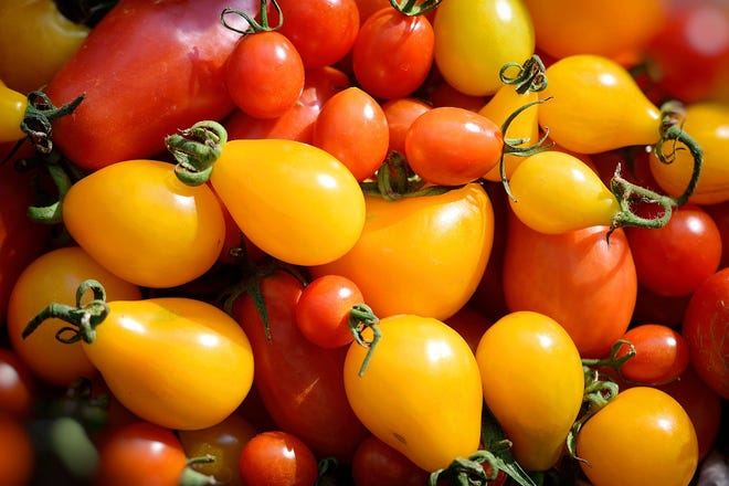Tomatoes are one of the most popular fruits grown by home gardeners.