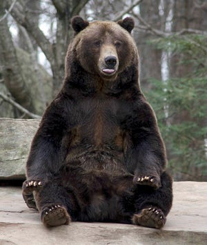 The North Carolina Zoo remembers Tommo as a goofy and amazing bear.