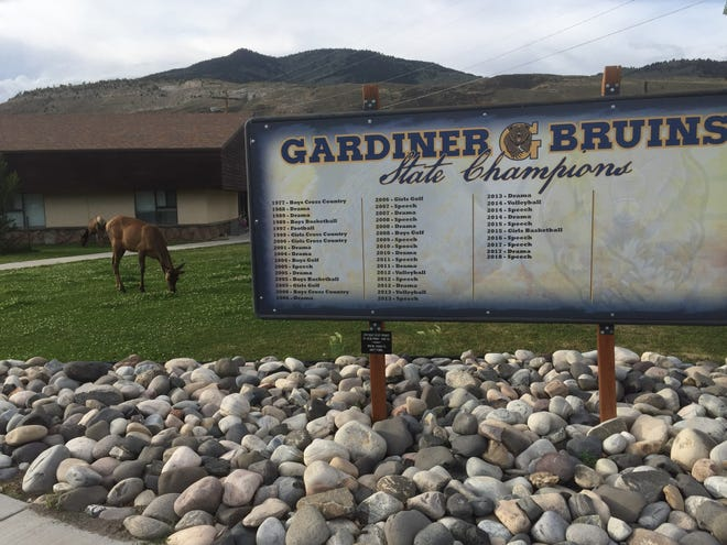 An elk grazes next to a sign in Gardiner (Mont.) High School depicting all the Bruins' state championships, including football in 1997. Elk and bison routinely graze in the school grounds, located about 200 yards from the north entrance to Yellowstone National Park.