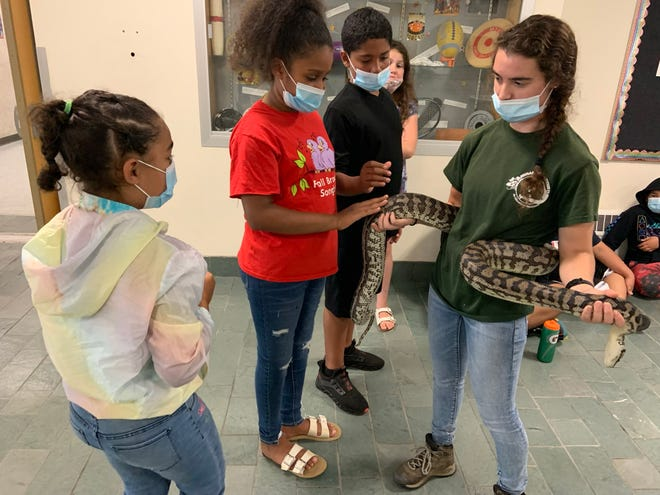 Lisa Savage, a zookeeper with Animal Adventures, allows members of the Boys & Girls Club Gardner Clubhouse get close to a carpet python at Gardner Middle School.
