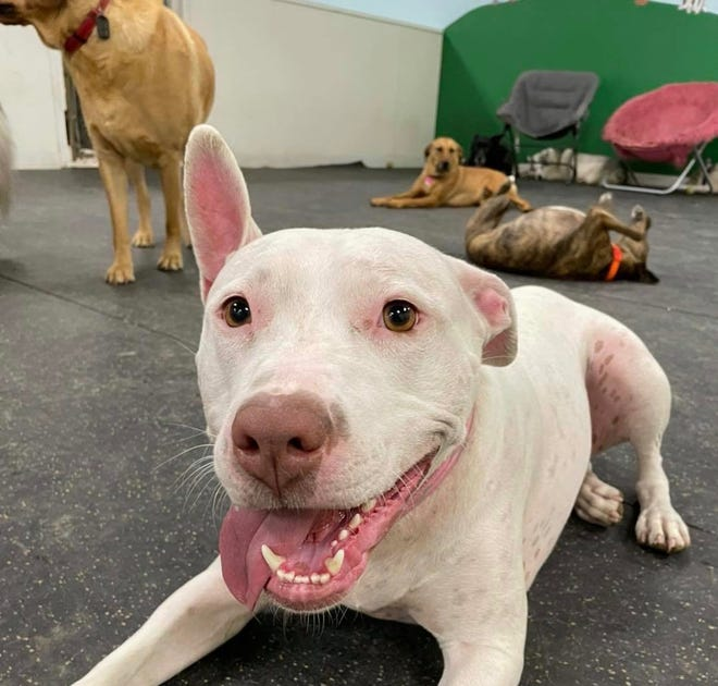 Dogs play at Paradigm Dog School in Holland Township. The business, formerly Dogs Bay North, announced its ownership change last week.