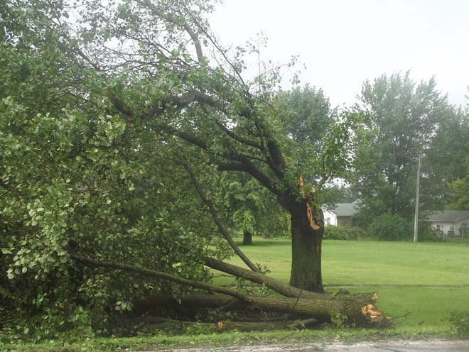 A tree severely damaged by storms over the weekend is seen in Bowen, Illinois.