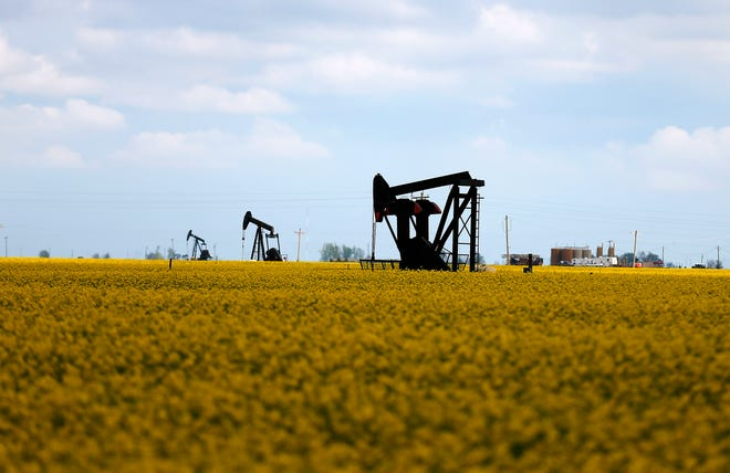 An oil pumper is pictured in a canola field near Hennessey.