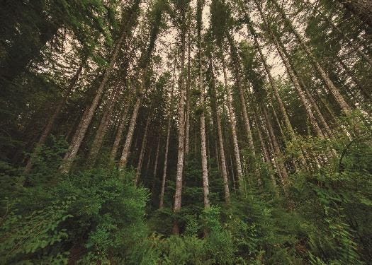 The city of Eugene purchased carbon offsets that will support this forested area in the Winston Creek Improved Forest Management Project.