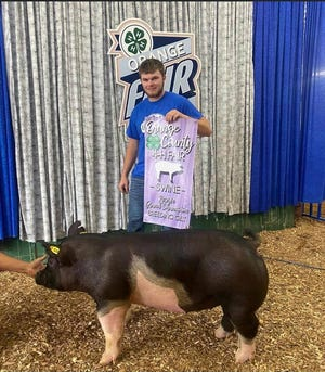 Cody Radtke's pig was named Reserve Grand Champion in Breeding Gilt at the Orange County 4-H Fair Swine Show for 2021.