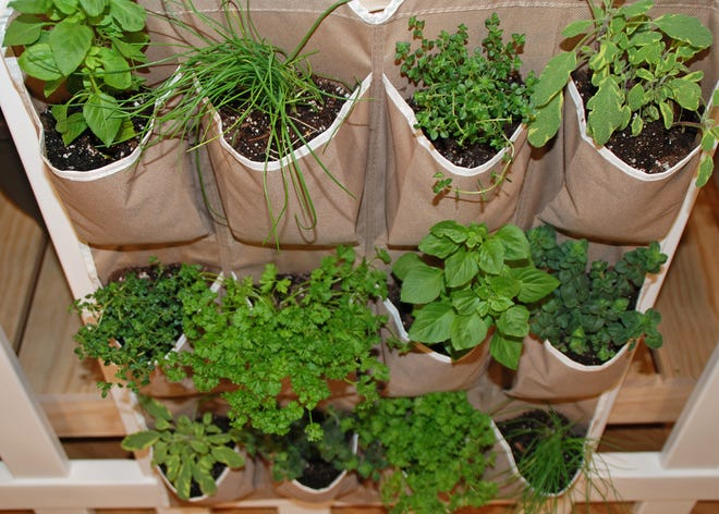 A shoe caddy is converted into an herb garden.