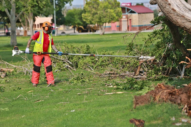 A city worker uses a long chainsaw to cut up a fallen tree at Apodaca Park on July 12, 2021. Two workers used chainsaws to trim the branches of this tree as they prepared to remove it from the park.