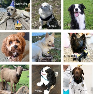 As of early July, these furry friends held the top nine spots in the Pin Up Paws contest hosted by the St. Augustine Humane Society. Each has already earned the $200 minimum required to be featured at the Pin Up Paws Primary kickoff event on July 16.